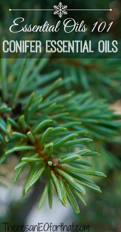 Conifer Essential Oils- Essential Oils 101